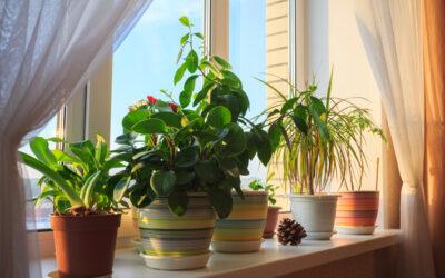 Just need taimed vähendavad ruumides müra!